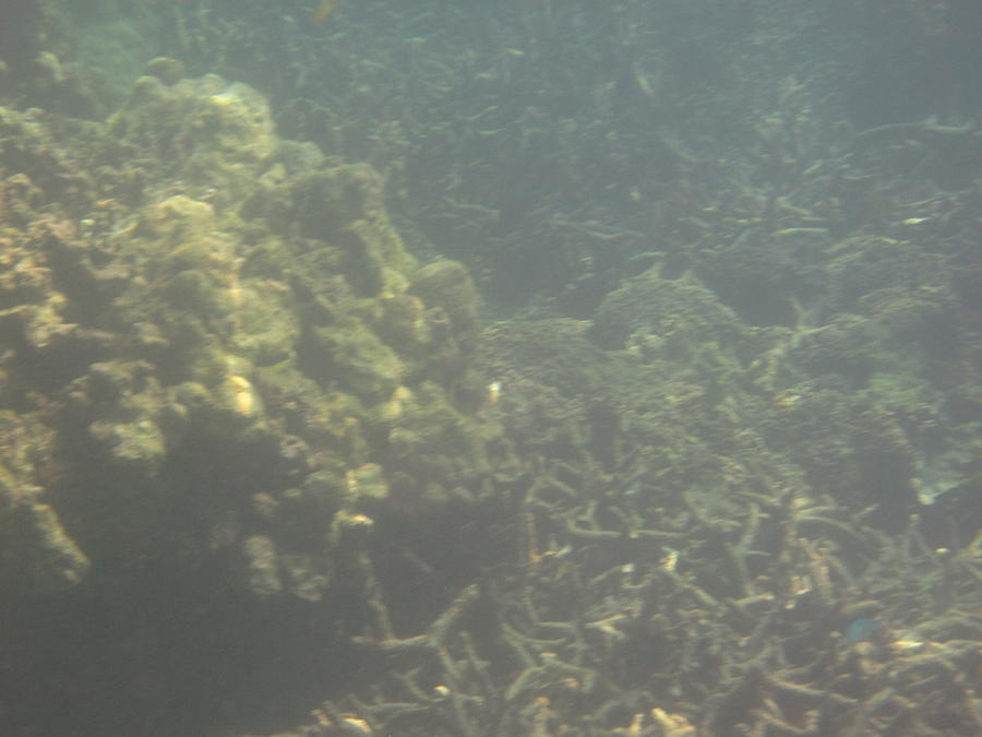 Underwater - Long Boat Tour - Phi Phi Island - 011338 Photograph