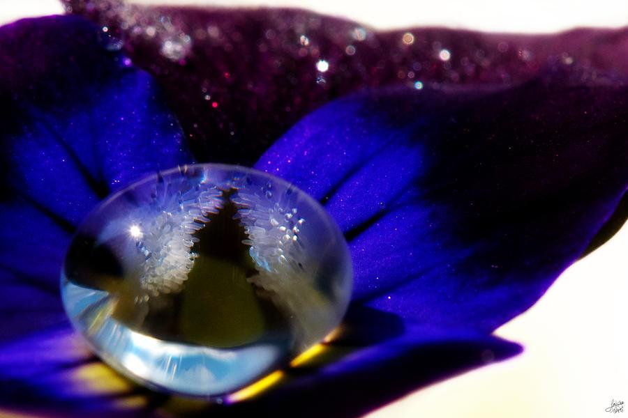 Viola Photograph - Underwater Universe Unfolding by Lisa Knechtel