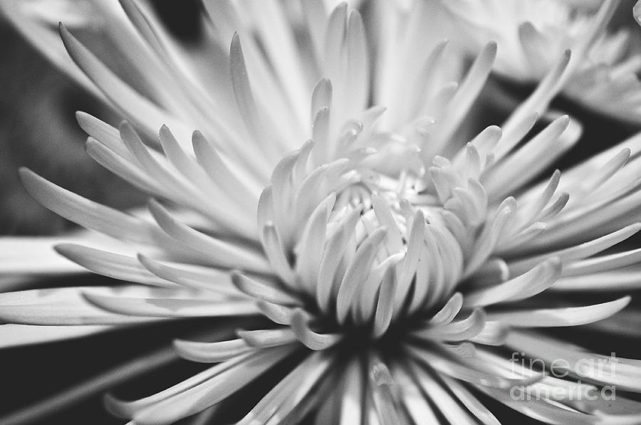 Unfolding Photograph