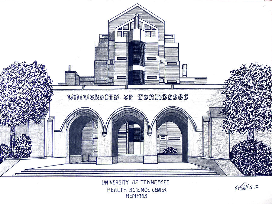University Of Tennessee Drawing  - University Of Tennessee Fine Art Print