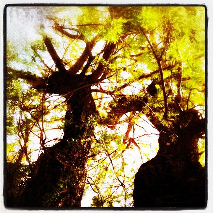 Twins Painting - Untitled-twin Trees by Juliann Sweet