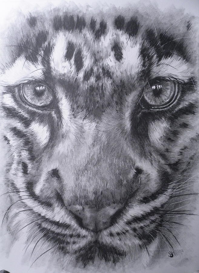 Up Close Clouded Leopard Drawing  - Up Close Clouded Leopard Fine Art Print
