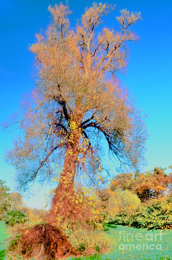 Up Rooted Tree Photograph  - Up Rooted Tree Fine Art Print