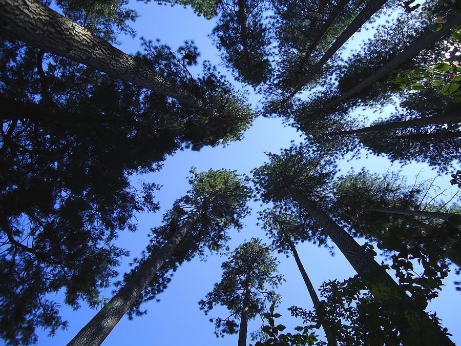 Upward Photograph