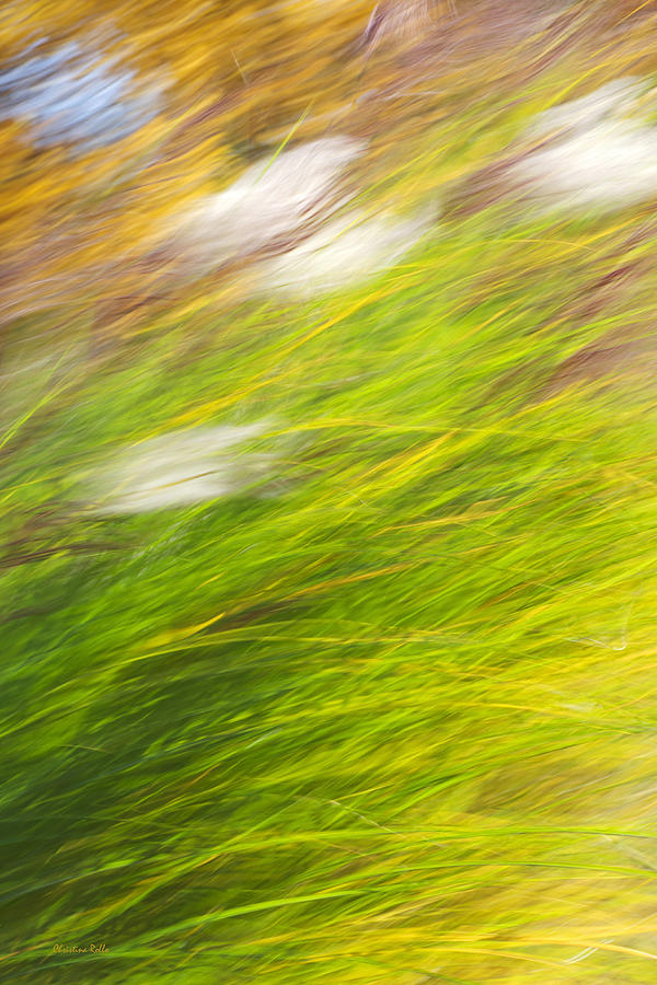 Colorful Photograph - Urban Nature Fall Grass Abstract by Christina Rollo