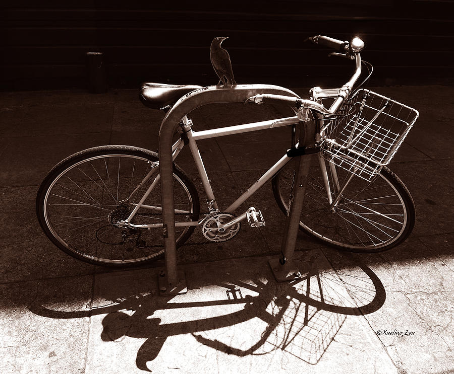 Bicycle Photograph - Urban Perch by Xueling Zou