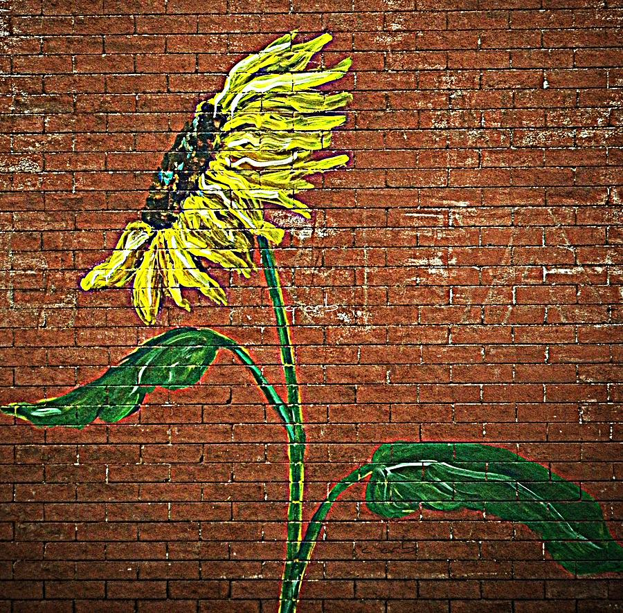 Urban Sunflower  Photograph  - Urban Sunflower  Fine Art Print