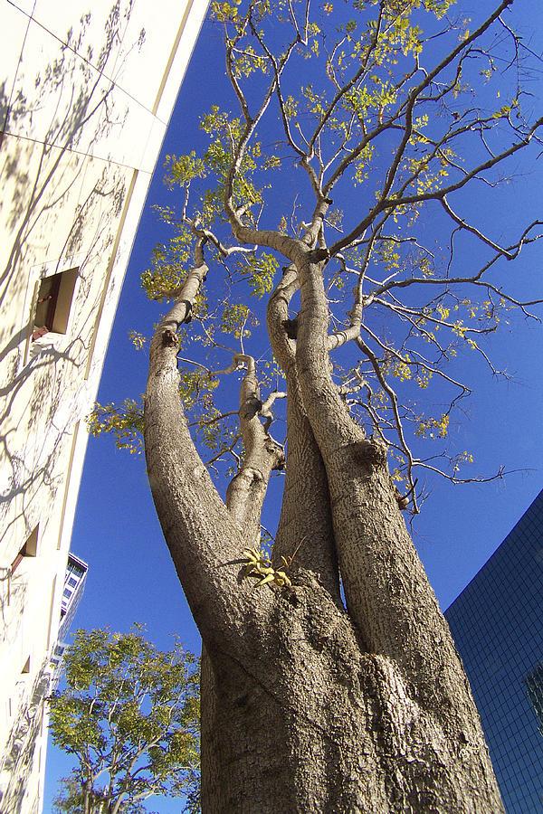 Urban Photograph - Urban Trees No 1 by Ben and Raisa Gertsberg
