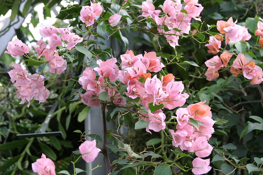 Us Botanic Garden - 121214 Photograph