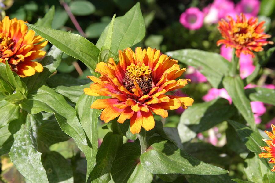 Us Botanic Garden - 121221 Photograph