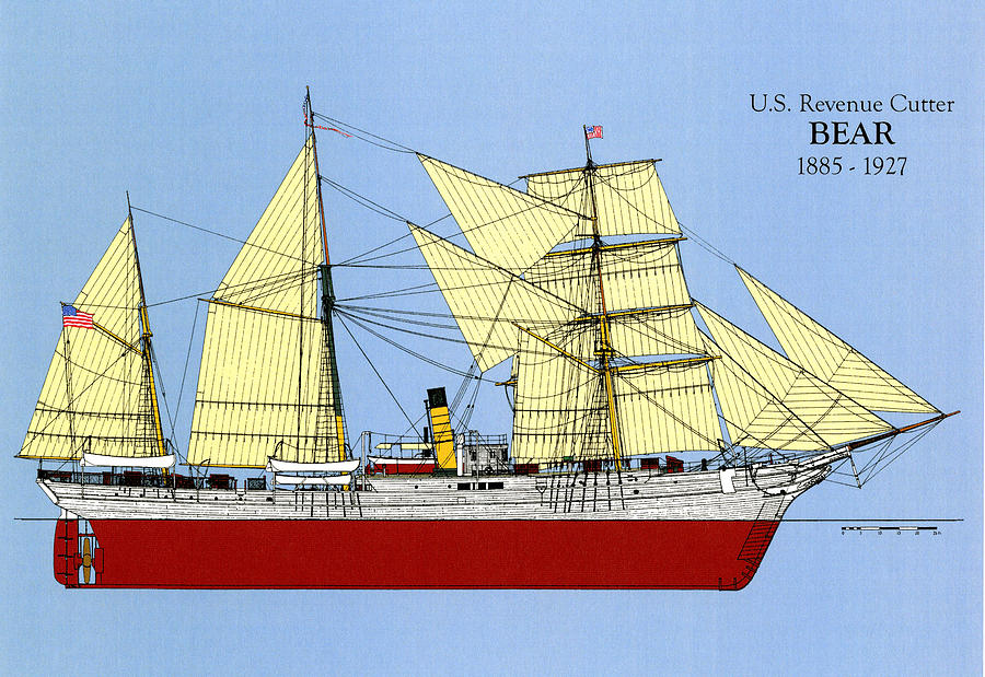 U.s. Revenue Cutter Bear Drawing