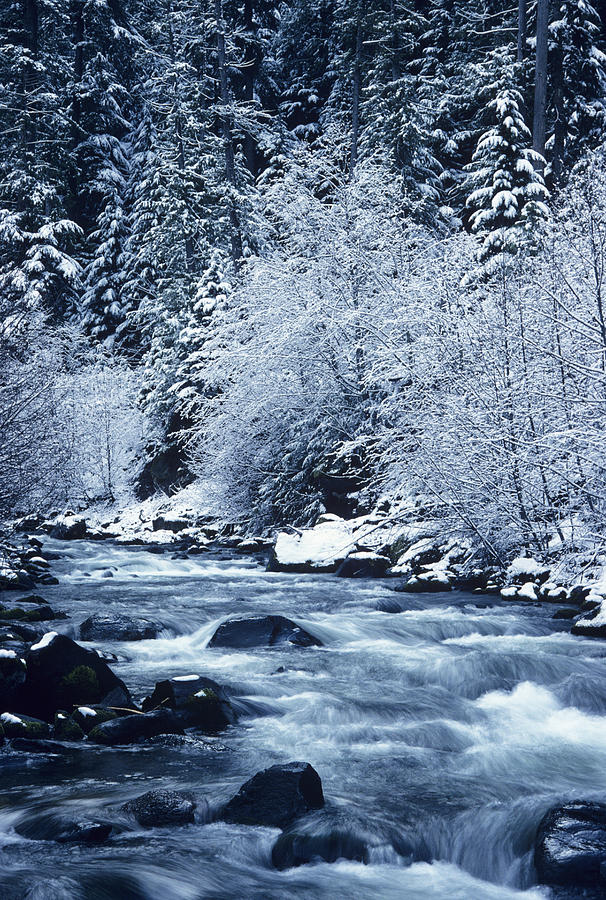 Ice Photograph - Usa, Willamette National Forest Oregon by Greg Vaughn