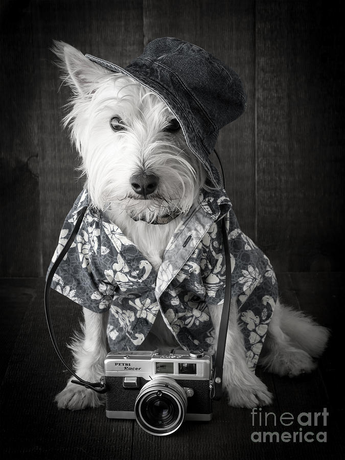Vacation Dog With Camera And Hawaiian Shirt Photograph