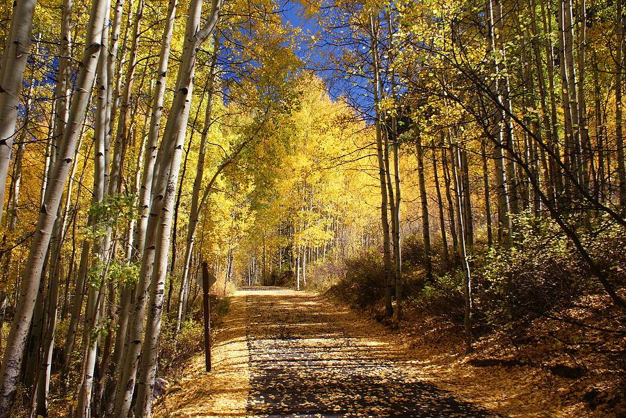 Landscape Photograph - Vail Colorado Fall Bike Path by Michael J Bauer