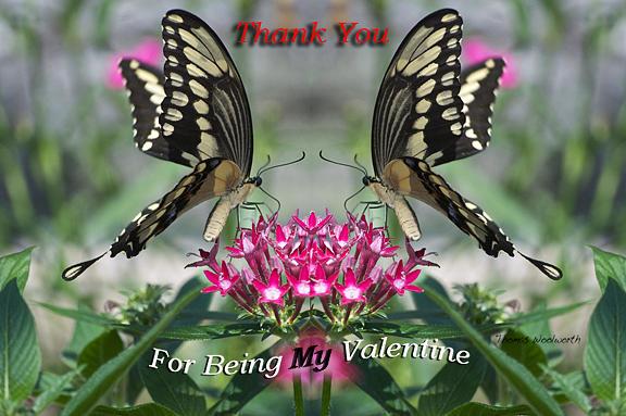 Valentine Thank You Photograph