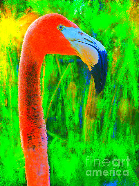 Van Flamingogh Photograph
