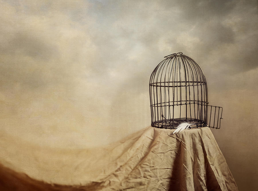 Cage Photograph - Vanishing Act by Amy Weiss