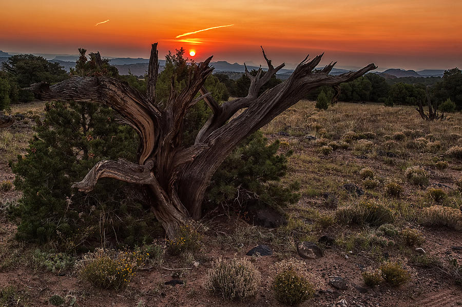 Veiled Sunrise Photograph