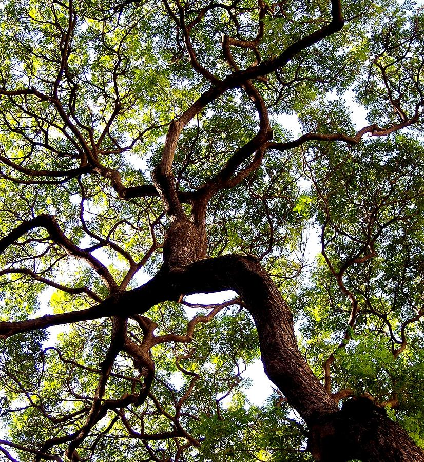Trees Photograph - Veins Of Life by Karen Wiles