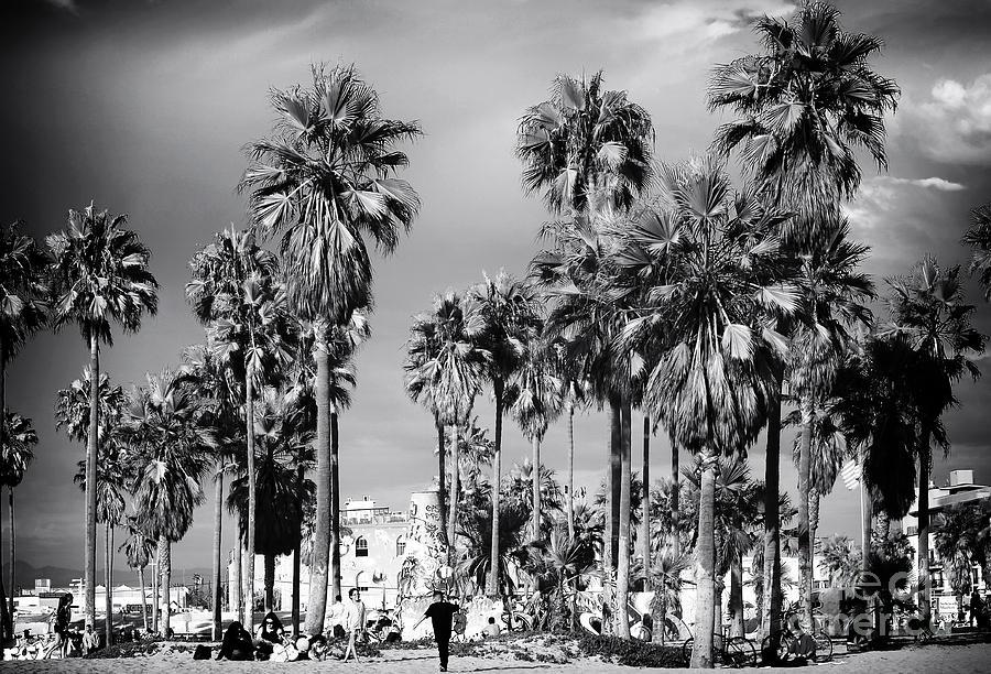 Venice Beach Palms Photograph
