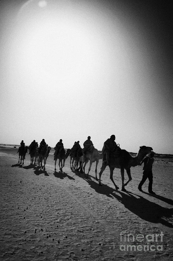 vertical hot sun beating down on sands and camel train in the sahara desert at Douz Tunisia Photograph