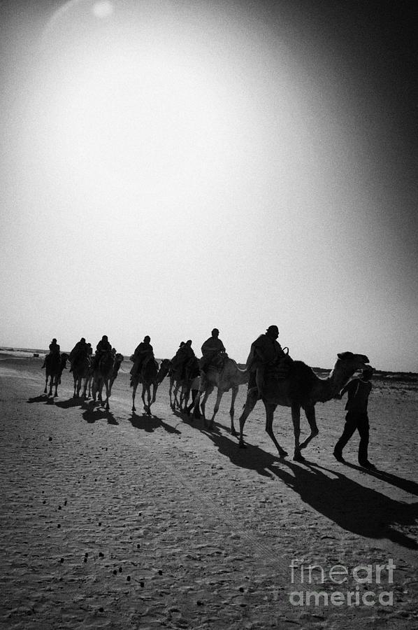 Tunisia Photograph - vertical hot sun beating down on sands and camel train in the sahara desert at Douz Tunisia by Joe Fox