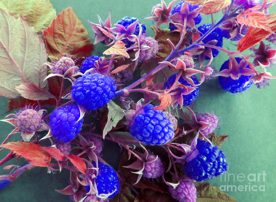 Very Blue Berries Photograph