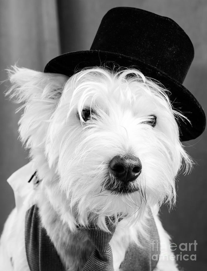 Actor Photograph - Veteran Vaudeville Stage Actor by Edward Fielding