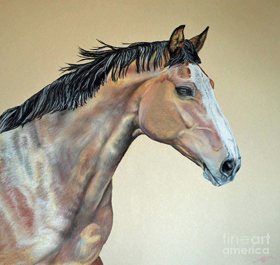 Veterinarians Warm Blood Horse Pastel  - Veterinarians Warm Blood Horse Fine Art Print
