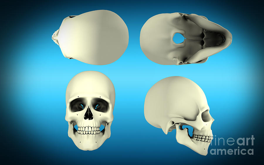 View Of Human Skull From Different Digital Art  - View Of Human Skull From Different Fine Art Print
