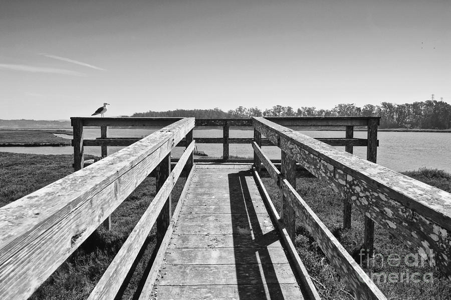 View Of The Elkhorn Slough From A Platform.  Photograph  - View Of The Elkhorn Slough From A Platform.  Fine Art Print