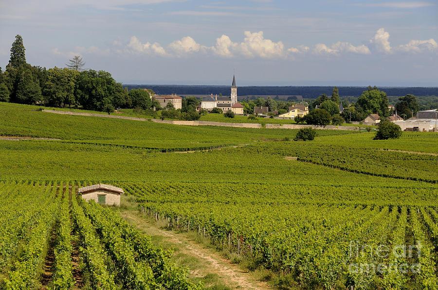 France Photograph - Village Of Aloxe Corton. Cote Dor. Burgundy. France by Bernard Jaubert