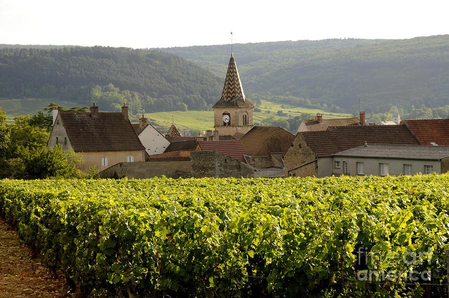 Agriculture  Photograph - Village Of Monthelie. Burgundy. France by Bernard Jaubert