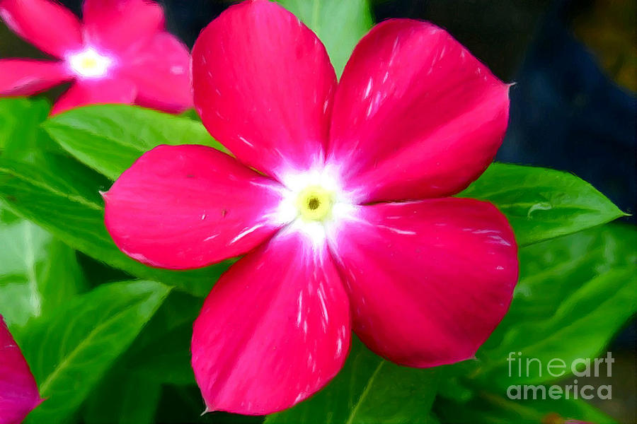 Vinca Flower Painting
