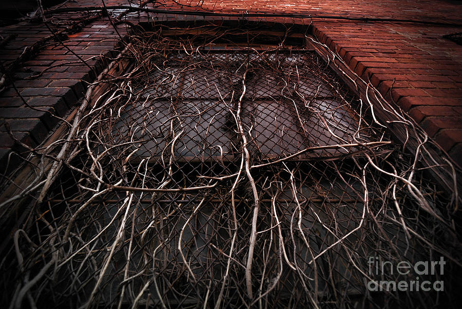 Vine Of Decay 1 Photograph  - Vine Of Decay 1 Fine Art Print