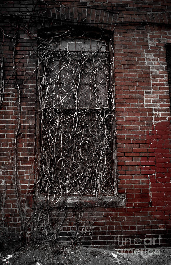 Vines Of Decay Photograph  - Vines Of Decay Fine Art Print