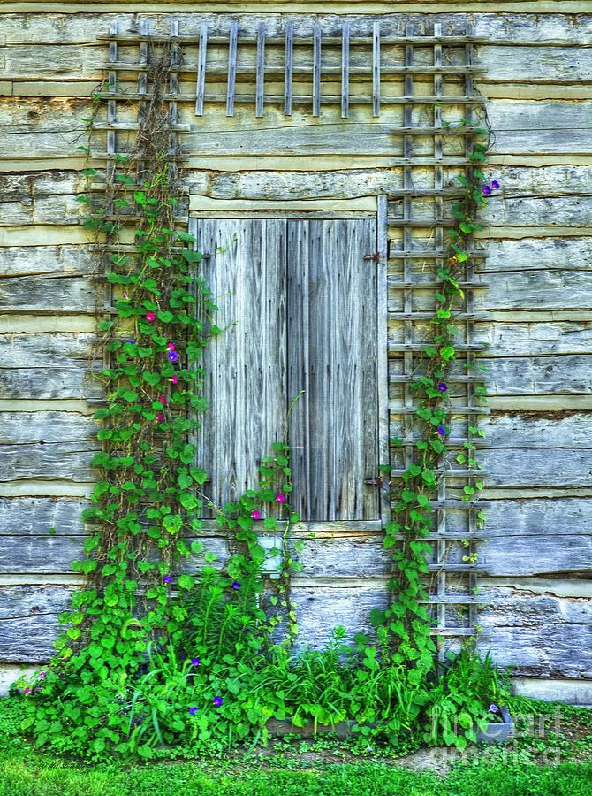 Vines Of Metamora Photograph  - Vines Of Metamora Fine Art Print