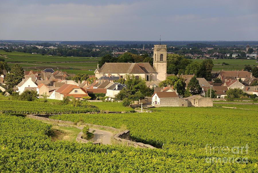 Agriculture  Photograph - Vineyard And Village Of Pommard. Cote Dor. Route Des Grands Crus. Burgundy. France. Europe by Bernard Jaubert