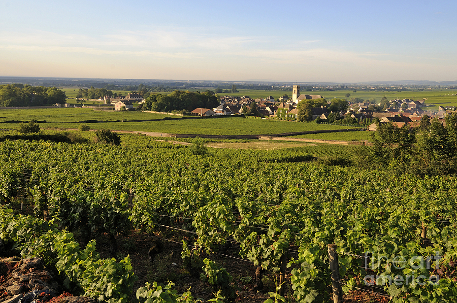 Agriculture  Photograph - Vineyard And Village Of Pommard. Cote Dor. Route Des Grands Crus. Burgundy.france. Europe by Bernard Jaubert
