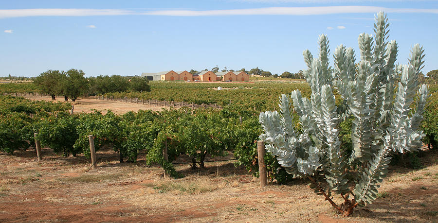 Vineyard And Winery Photograph