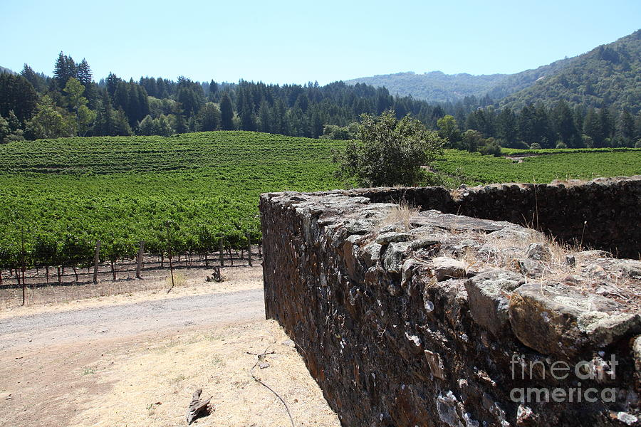 Vineyard And Winery Ruins At Historic Jack London Ranch In Glen Ellen Sonoma California 5d24537 Photograph