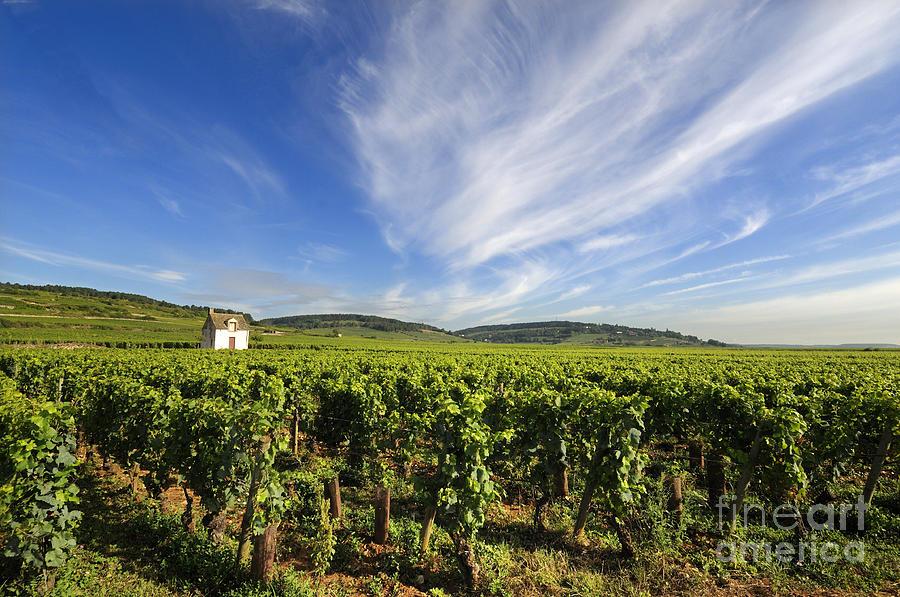 Area   Photograph - Vineyard Hut. Vineyard. Cote De Beaune. Burgundy. France. Europe by Bernard Jaubert
