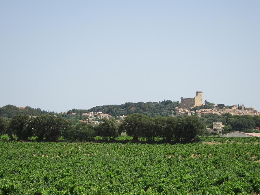 Vineyard Photograph - Vineyard In Provence by Pema Hou