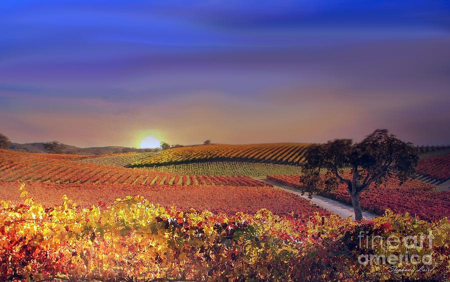 Vineyard Light Photograph