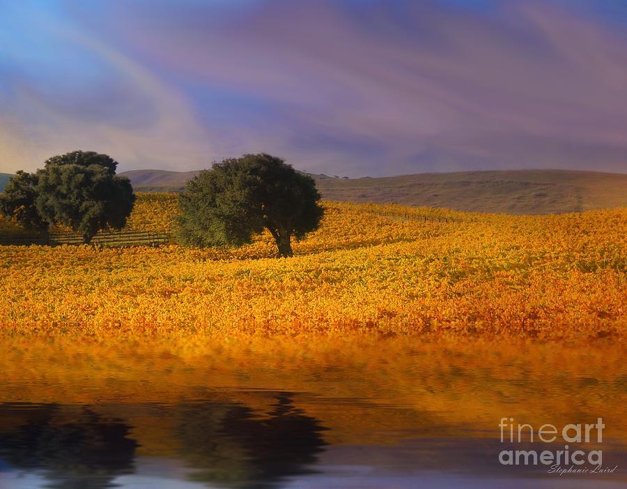 Vineyard Photograph - Vineyard Magic by Stephanie Laird