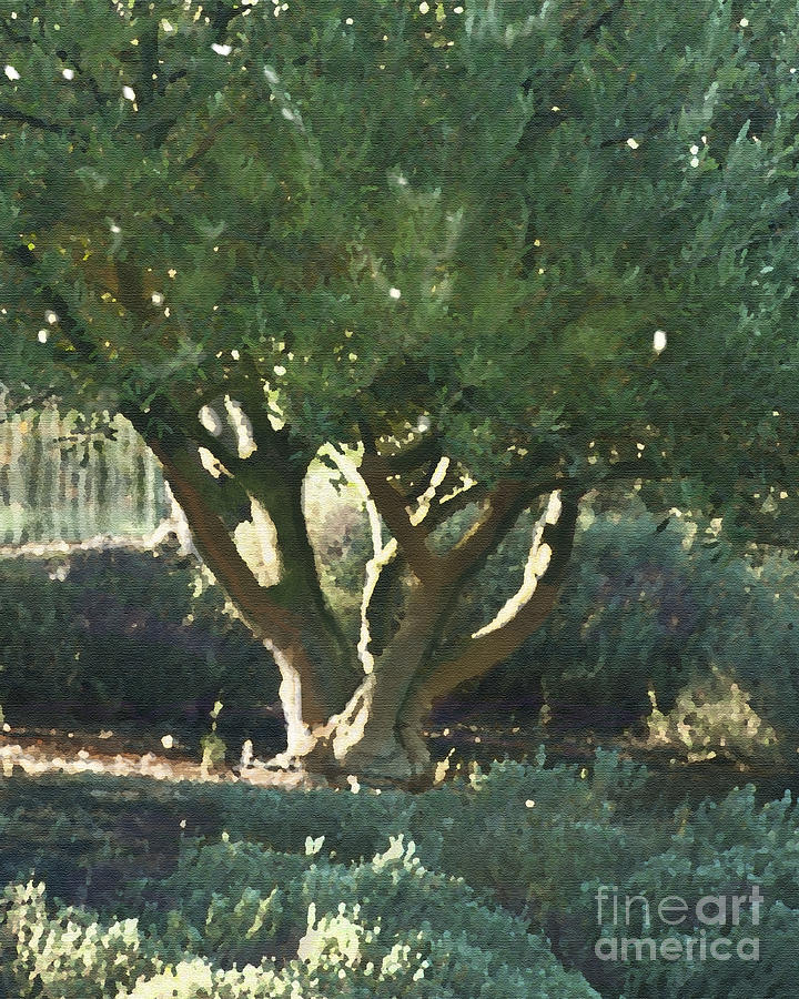 Vineyard Olive Painting