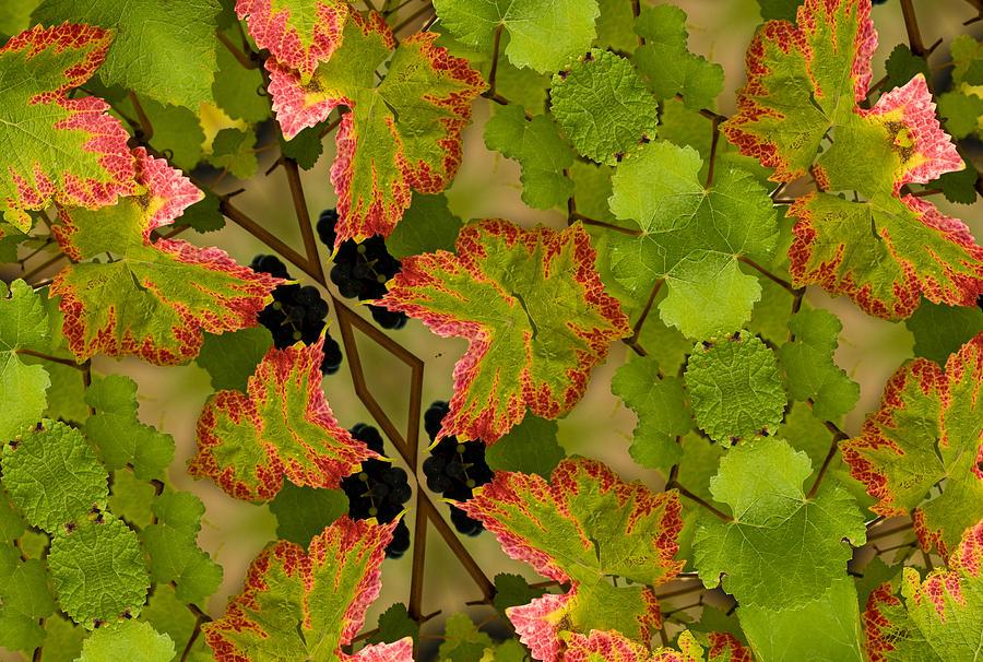 Vineyard Quilt Photograph