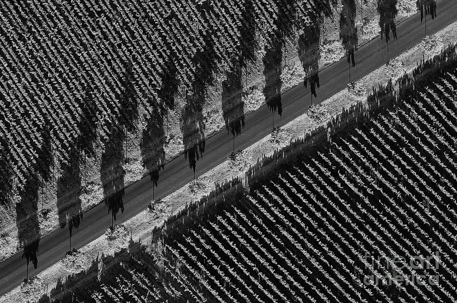 Vineyards From Hot Air Balloon Photograph