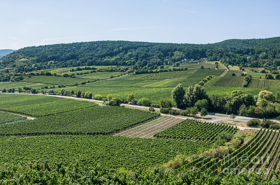 Vineyards In Rhineland Palatinate Photograph  - Vineyards In Rhineland Palatinate Fine Art Print