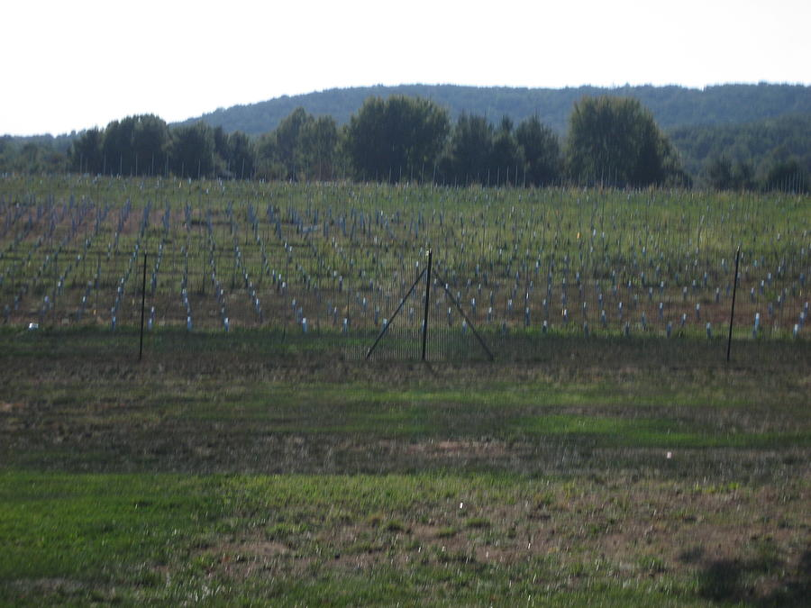 Vineyards In Va - 121255 Photograph